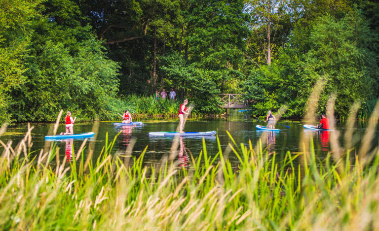 Four people paddleboard on the lake, with reeds in soft focus in the foreground.